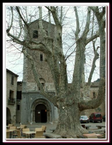 Platane de Saint Guilhem le Désert
